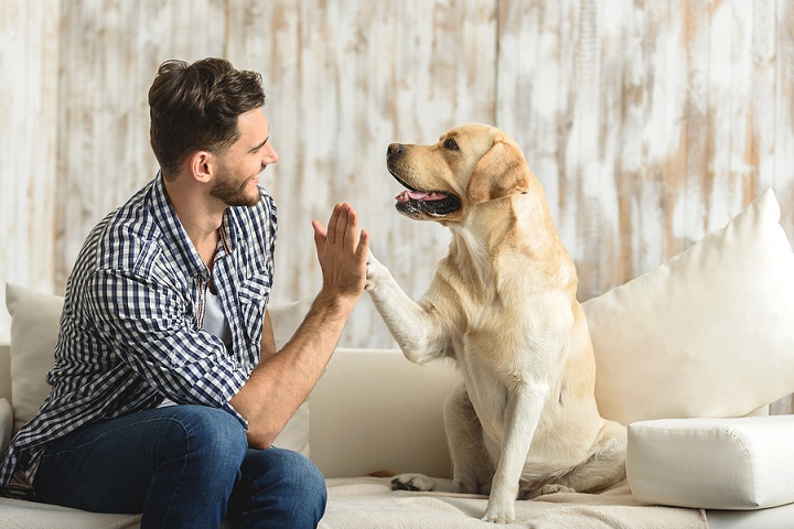 How-to-Stop-Your-Dog-From-Barking