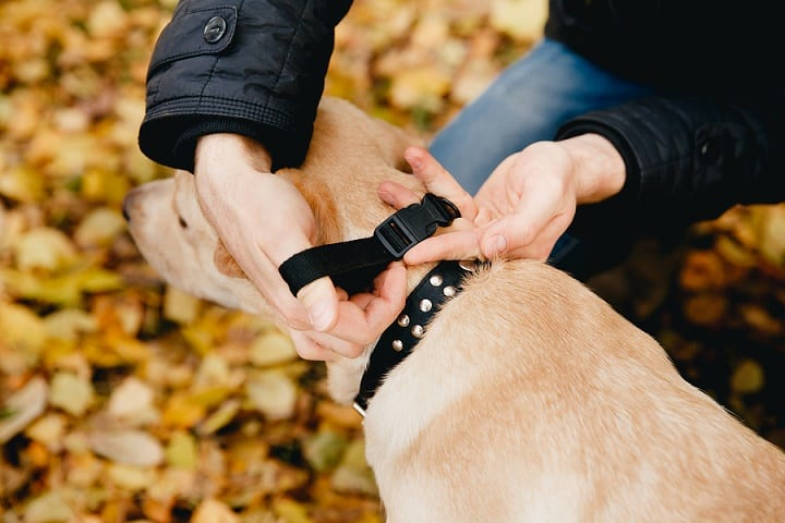 Things-You-Should-Consider-When-Choosing-a-Dog-Training-Collar