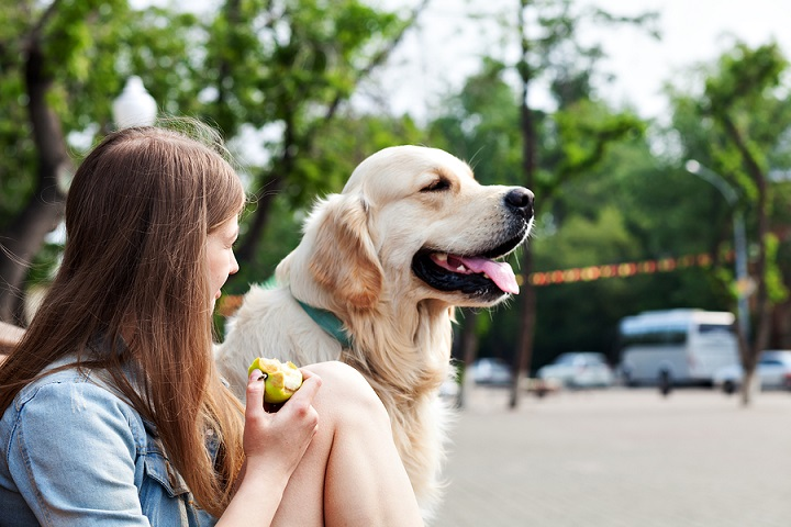 How-to-Use-a-Dog-Training-Collar