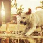 Best-Dog-Water-Fountain