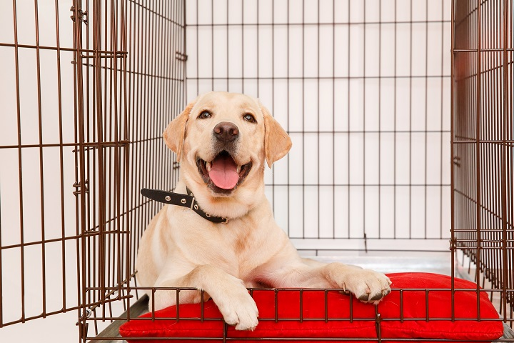 Best-Large-Dog-Crates