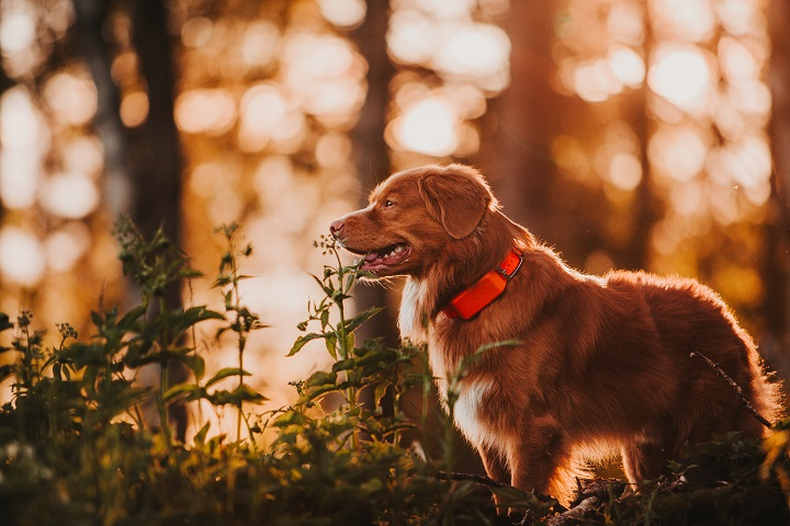 Best-Dog-GPS-Trackers