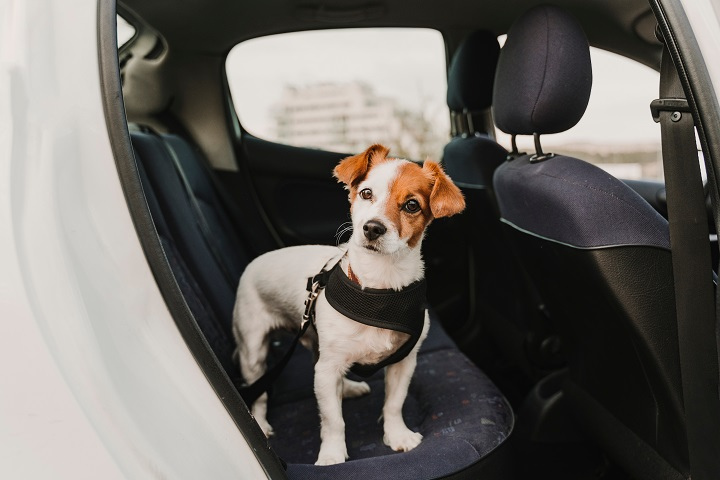 Best-Dog-Harnesses-for-Car-Travel