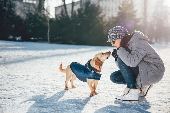 Best-Dog-Winter-Coats