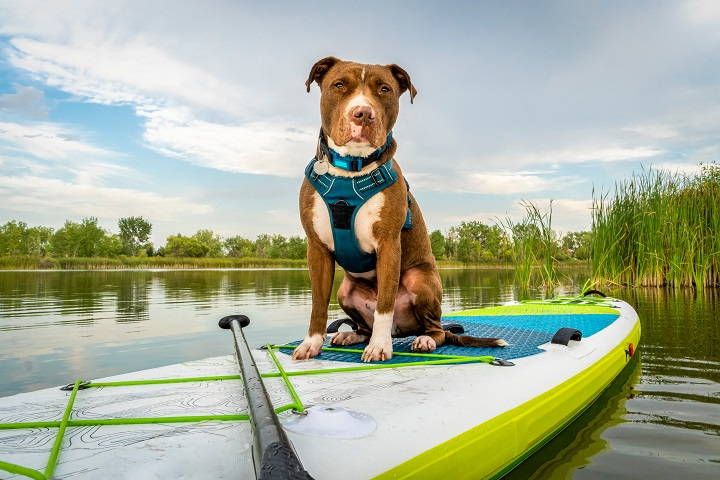 Best-Escape-Proof-Dog-Harnesses