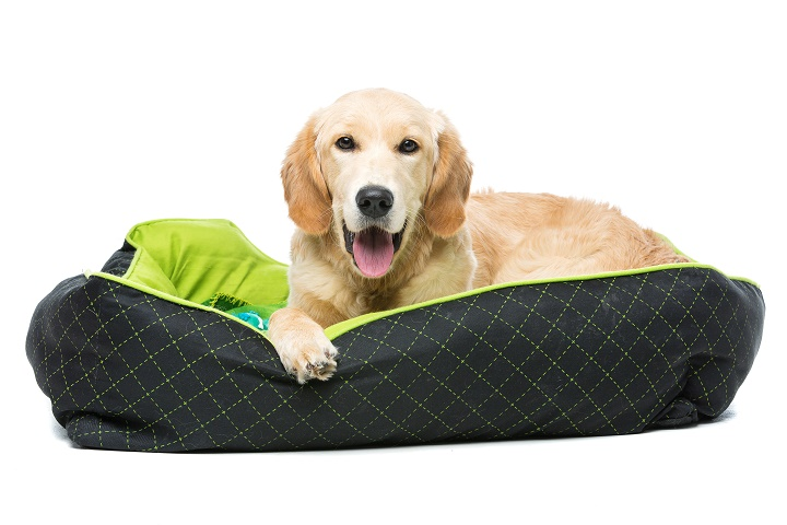 Best-Heated-Dog-Beds