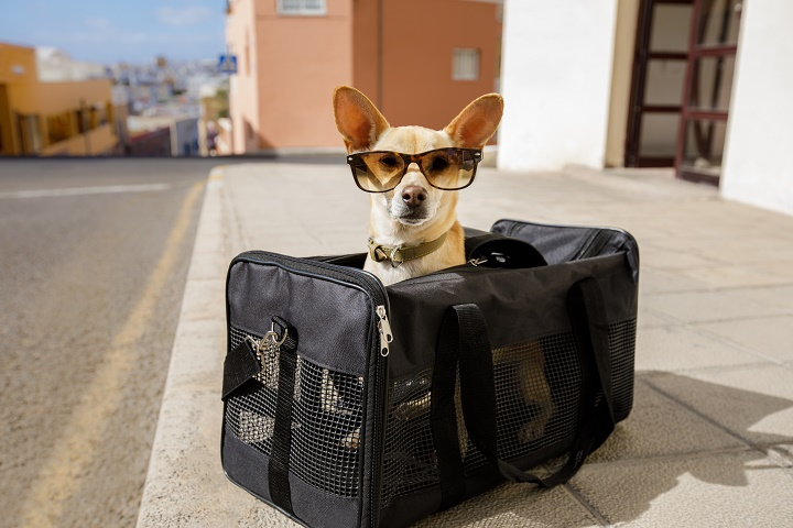 The 15 Best Motorcycle Dog Carriers of 2021