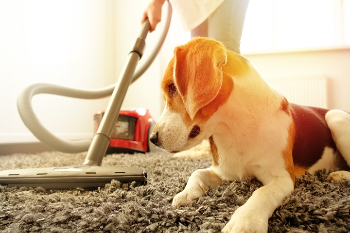 Best-Rugs-For-Dog-Owner