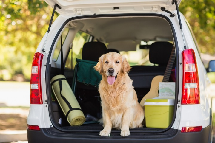 Dog-Crates-and-Carriers-for-Car-Travel