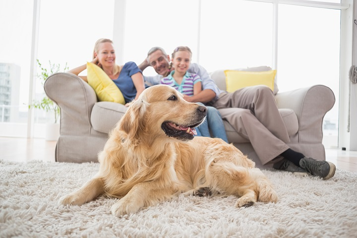 Rugs-For-Dog-Owner-Buyers-Guide