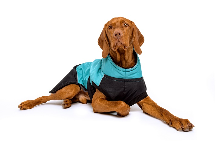 Best-Dog-Coats-For-Large-Dogs