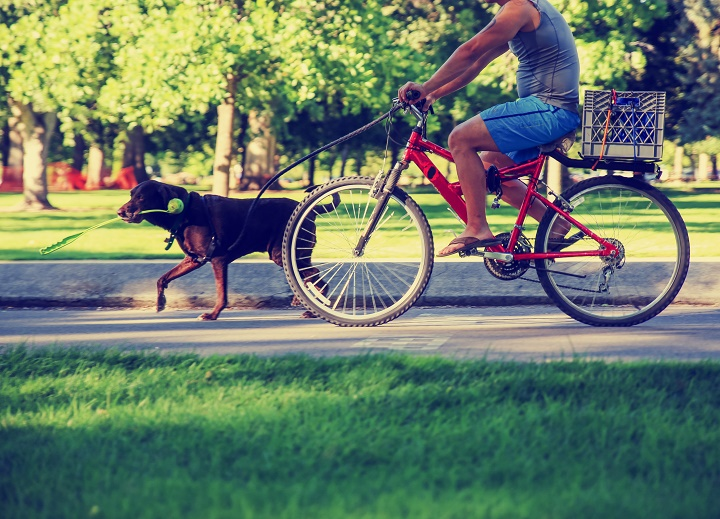 Best-Dog-Leashes-For-Biking