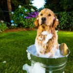 Best-Dog-Paw-Washers
