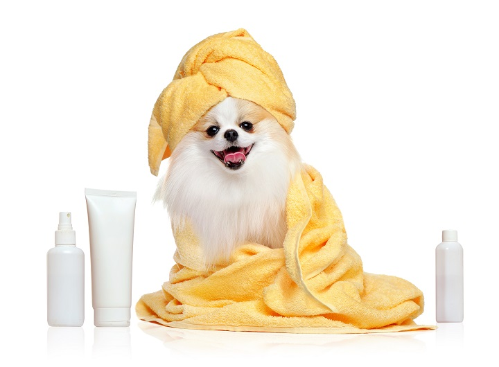 Best-Dry-Shampoos-for-Dogs
