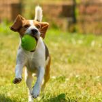 Best-Indestructible-Dog-Toys