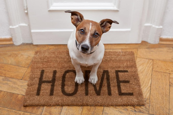 Best-Doormats-for-Dogs