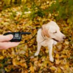 Best-Vibrating-Dog-Collars