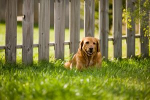 Backyard-Dog-Fences