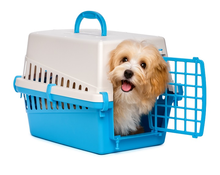 Best-Airline-Approved-Dog-Crates