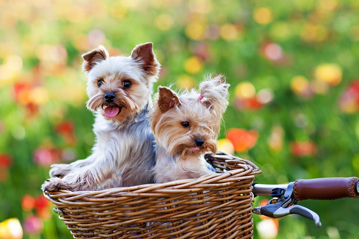 Best-Dog-Bike-Baskets