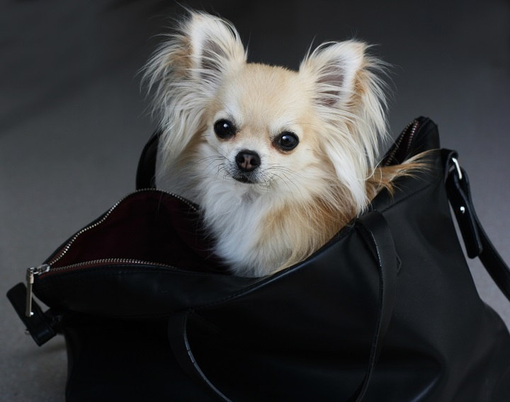 Best-Dog-Carrier-Purses