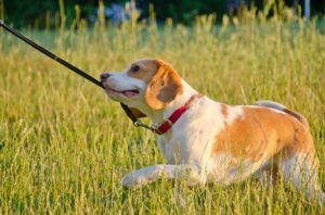 Best-Dog-Collars-for-Pulling