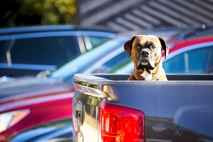 Best-Dog-Crate-for-Truck-Bed