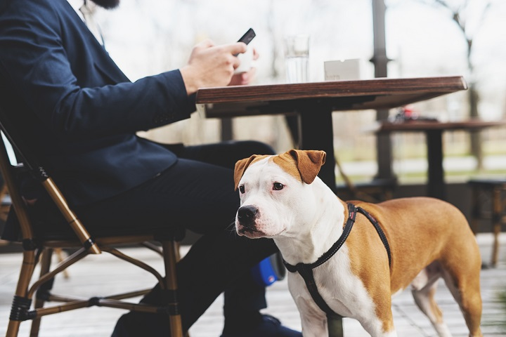 Dog-with-its-owner-at-a-coffee-shop