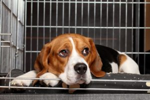How-To-Get-a-Puppy-to-Stop-Crying-in-His-Crate