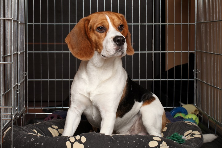 Ways-To-Stop-Your-Dog-From-Crying-in-His-Crate