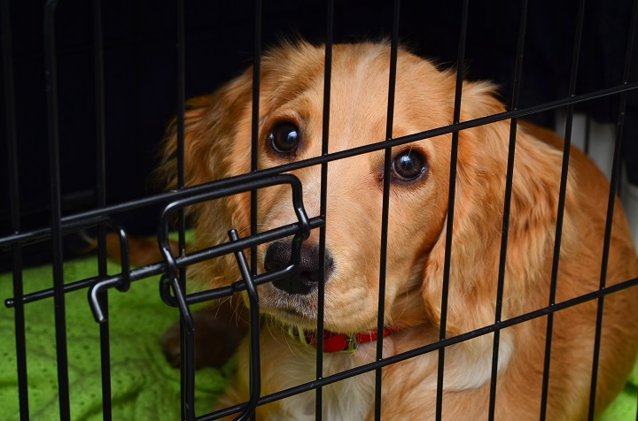 Why-Dogs-Cry-in-the-Crate