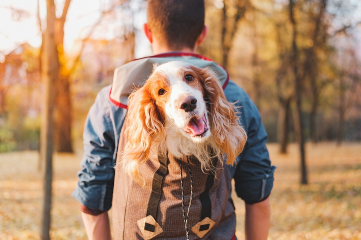 Best-Dog-Backpack-Carriers