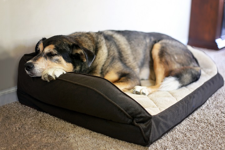 Best-Dog-Beds-for-Arthritic-Dogs