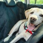 Best-Dog-Car-Seat-Covers