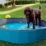 Best-Dog-Pools