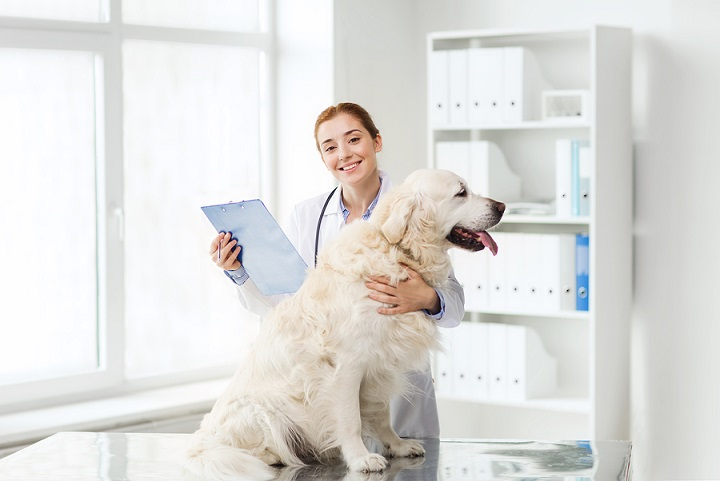 Consult-Your-Veterinarian