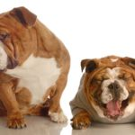 How-to-Fatten-up-a-Dog