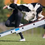 Best-Dog-Ramps