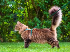 Best-Cat-Harnesses