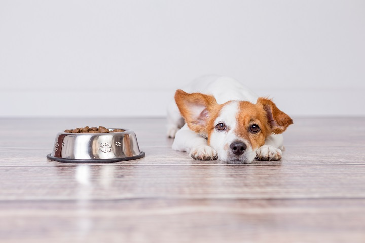 Best-Dog-Food-for-Puppies