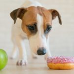 Diet-for-My-Dog-with-Diabetes