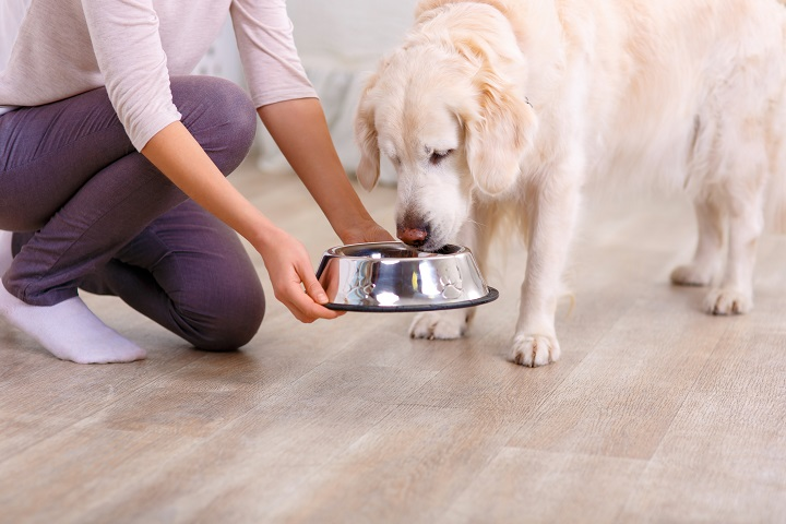 Dog-Food-for-Weight-Gain