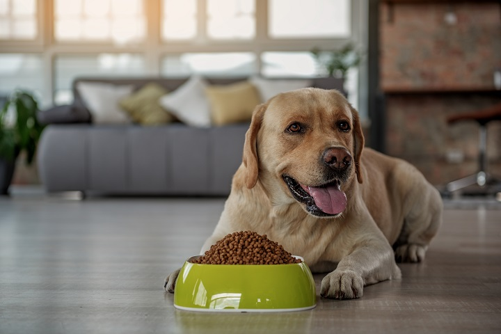 When-to-Switch-to-Adult-Dog-Food