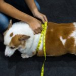 Signs-of-Diabetes-in-Dogs