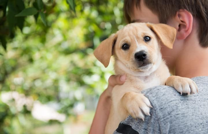 Surrendering-Your-Pup-the-Right-Way